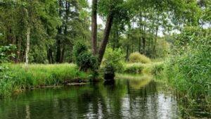 Der Spreewald mit seinen wunderschönen Wiesen und Wäldern.