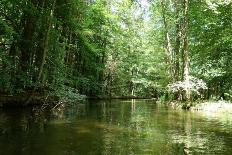Der wunderschöne, Natur überlassene Fluss Rhin in seiner ganzen Pracht. Kajak-Tagestour Auf dem Rhin von Rheinsberg über Rheinshagen nach Zippelsförde Samstag nur vom 15. Juni - 31. Oktober befahrbar
