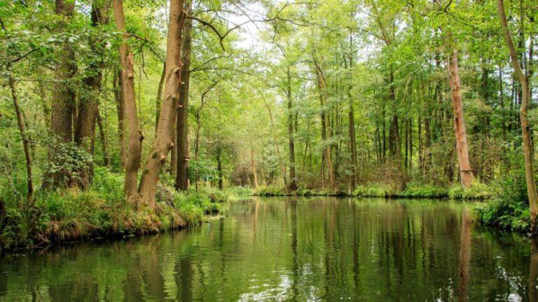 Der Spreewald mit seinen vielen Kanälen.