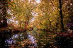 Der Spreewald im wunderschönen Herbstkleid.